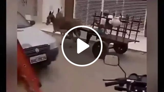 man controls two donkeys in city