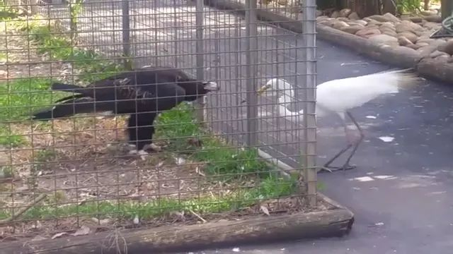Eagle is very smart in finding food - Video & GIFs   Smart eagle, American zoo, smart animal