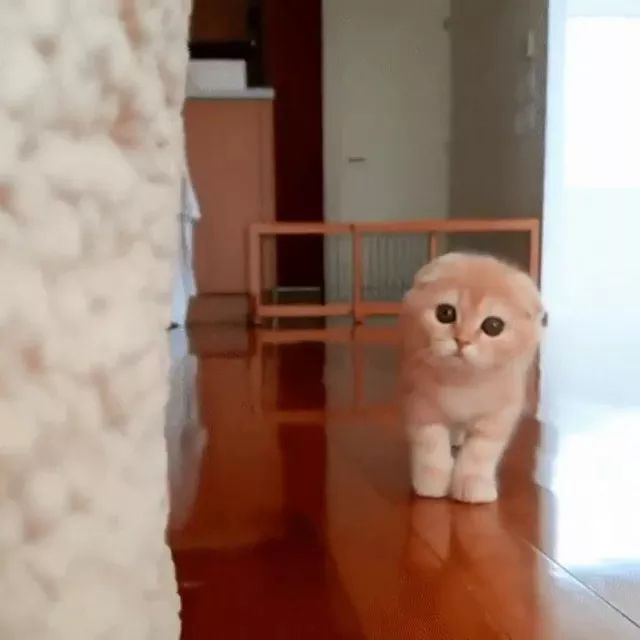 In house, kitten moves at a very fast speed - Video & GIFs | indoor, high-class furniture, kittens, moving, speed very fast