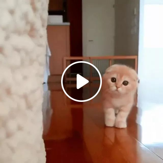 In house, kitten moves at a very fast speed