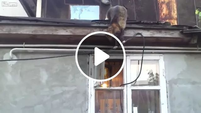 smart cat climbed from roof onto rope through window and entered house, smart cat, climbing, from the roof, rope, window, house, luxurious interior