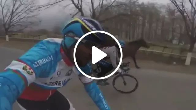 on the road, horse followed bike rider