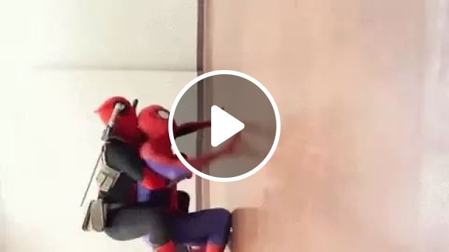 Spider family, Funny spiders, luxury apartments