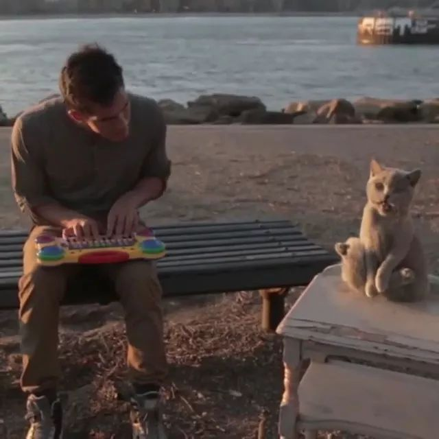on the beach, a man sat on a chair performing piano with cat
