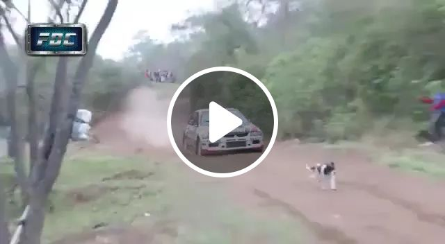 Lucky Dog Is Not Injured On The Track - Video & GIFs | dog, pet, adorable, lucky, not injured, on the track, sports car, luxury car