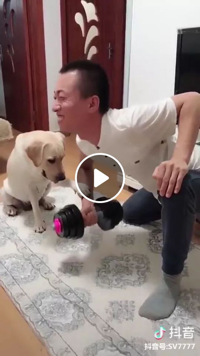 Dog Training For Humans - Video & GIFs   Funny men, men's fashion clothes, sports equipment, smart dogs, funny animals, pets
