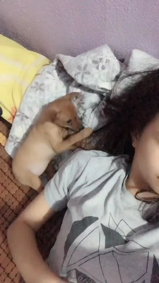 Puppy plays with girl's hair