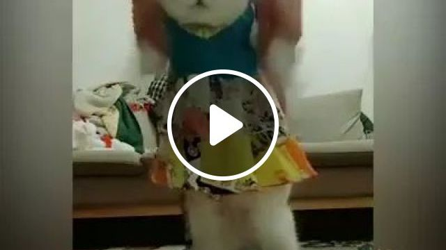 Fitness - Video & GIFs | cat, adorable