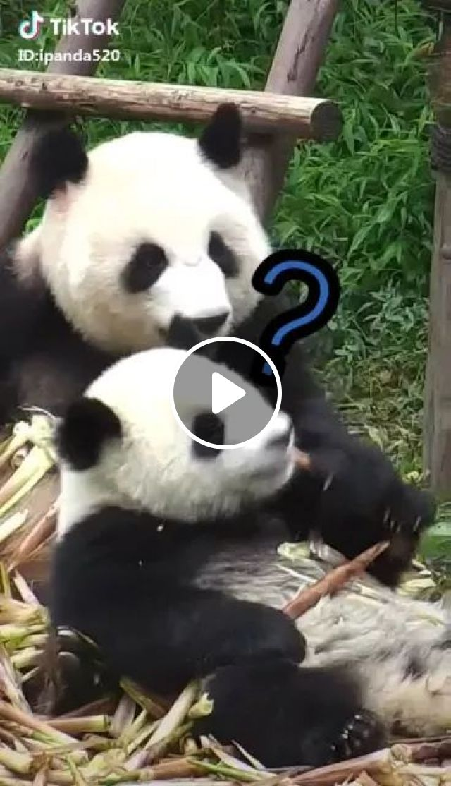 What Is Sin Of Gluttony - Video & GIFs | Cute panda, animal food, funny animals, take care of animals