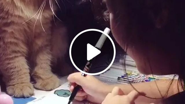 Cat And Child Draw Together - Video & GIFs | yellow fur cats, cute cats, cat breeds, cute children, children's fashion clothes, drawing tools, wooden tables