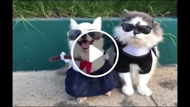 Dog And Cat Prepare For European Travel - Video & GIFs | dogs, cats, animals, pets, preparation, european travel