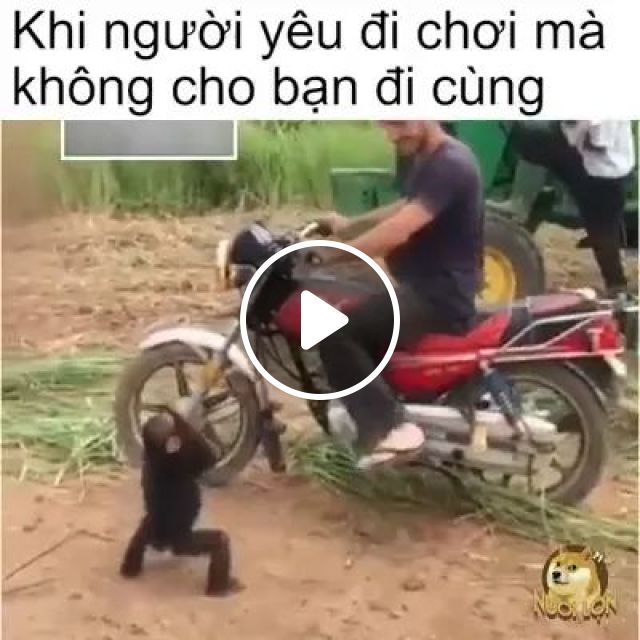 Let Me Go With You - Video & GIFs | monkey, adorable, funny, animal, motorbike