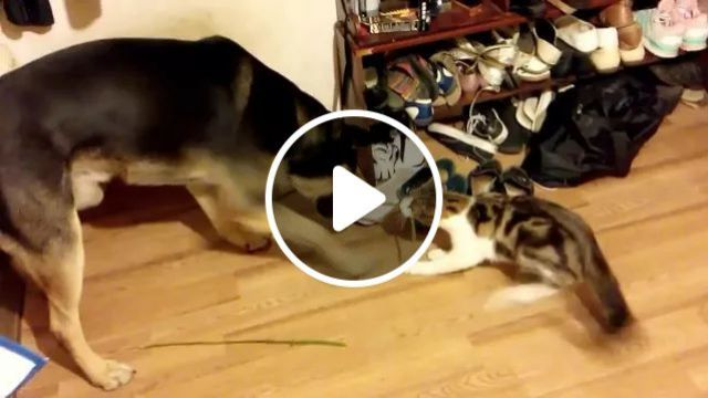 Dog And Cat With Plush Shoes - Video & GIFs | animals, pets, dogs, cats, fashion shoes