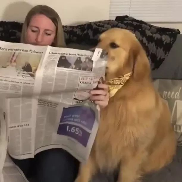 Dog and girl read newspaper in living room