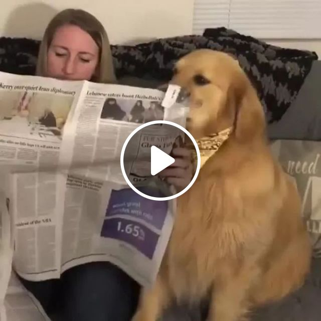 Dog and girl read newspaper in living room, Yellow dog, dog breed, female fashion clothes, newspaper reading, living room furniture