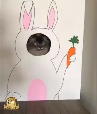 Delicious carrot and cute cat