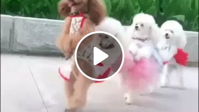 Dogs...Go Everywhere - Video & GIFs | dog, adorable, puppy