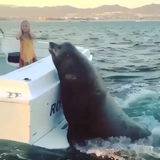 Let me on the boat with you