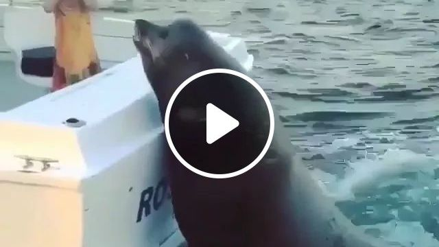 Let Me On The Boat With You - Video & GIFs | seal, boat, sea, nature, ocean, Russia travel