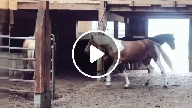 Sunday, Im Free - Video & GIFs | horse, animal, adorable, funny