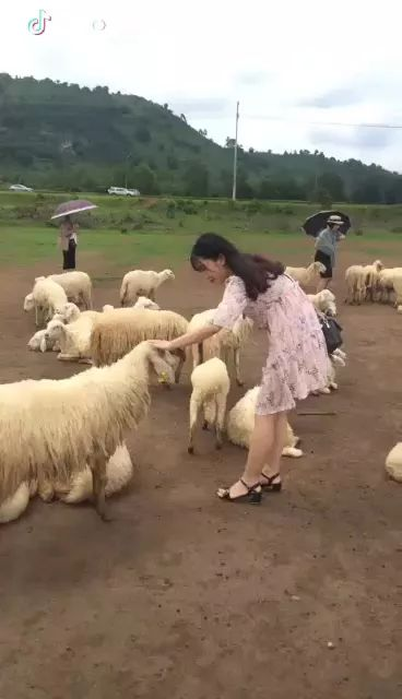 girl loves sheep in mountain travel