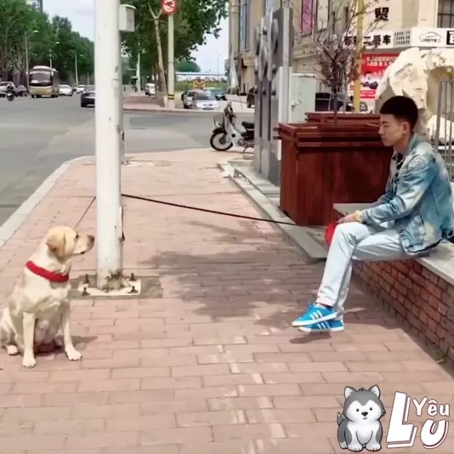 Man and dog waiting for each other on the street