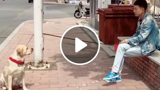 Man And Dog Waiting For Each Other On The Street - Video & GIFs   Man, male fashion, dogs, animals, pets, streets, modern city