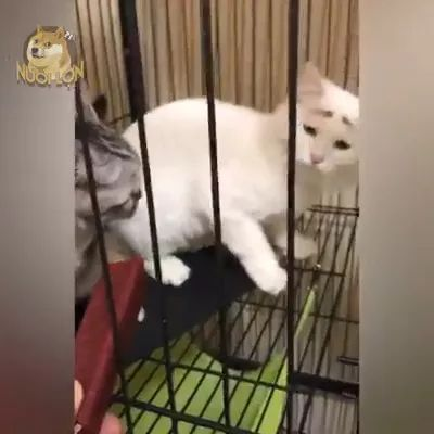 In cage, poor cat does not have food