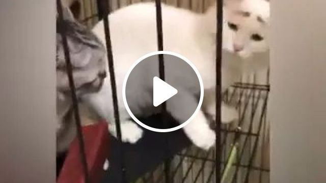 In cage, poor cat does not have food, cages iron, poor cats, pet food, pet care, animal care