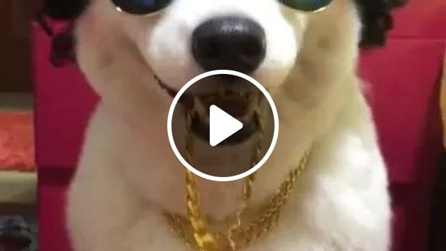 I Look Very Good - Video & GIFs   dog, adorable, glass, cool