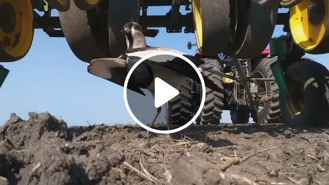 Mother Bird Tries To Protect Egg Nest - Video & GIFs | Cute bird, smart animal, Agricultural machine