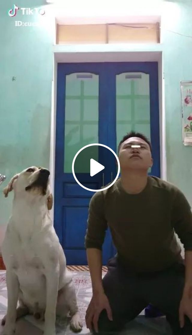 dog and a man keep cake balanced on the nose, Smart dogs, funny animals, pet, dog eating, cute men, men's fashion clothes