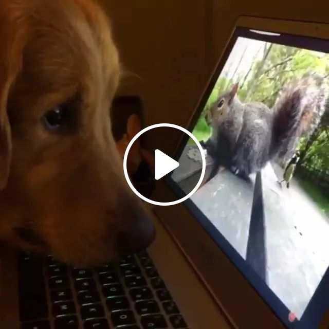 Dog And Laptop - Video & GIFs | dog breeds, computer laptop, animals cute, pets,