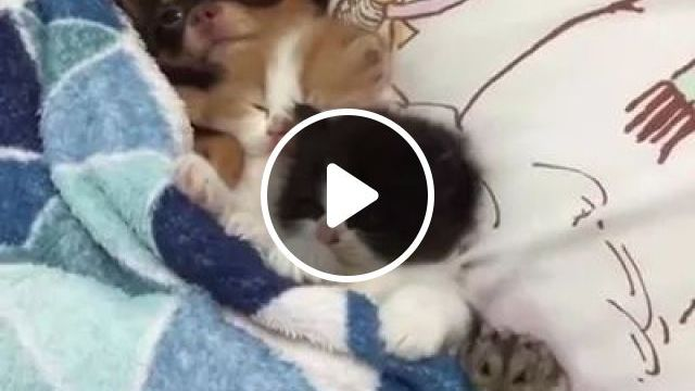 Mother Cats And Cute Children - Video & GIFs | Funny animals, pets, cute cats, luxury houses