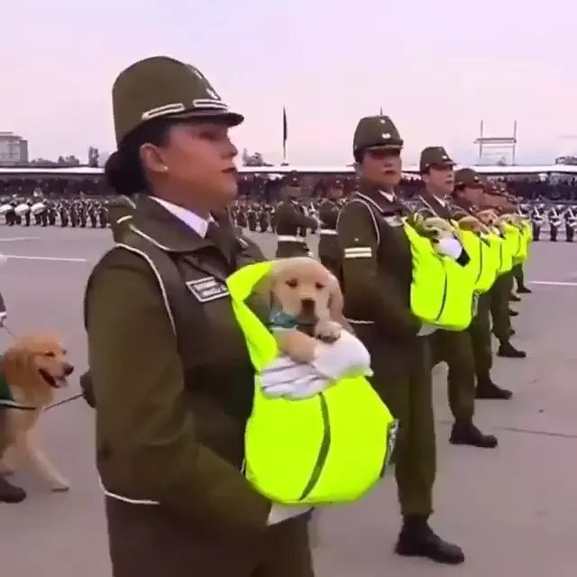 Army and Dogs