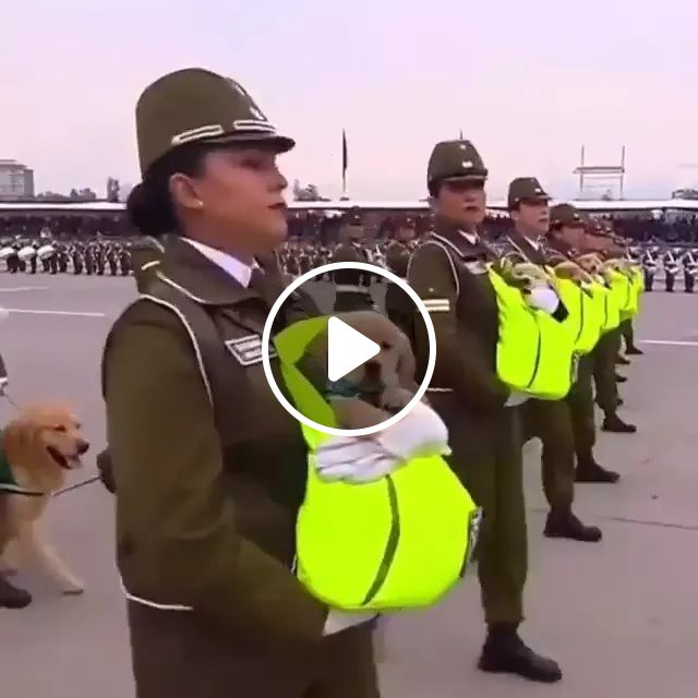 Army And Dogs - Video & GIFs | army, dog, puppy, adorable, performance