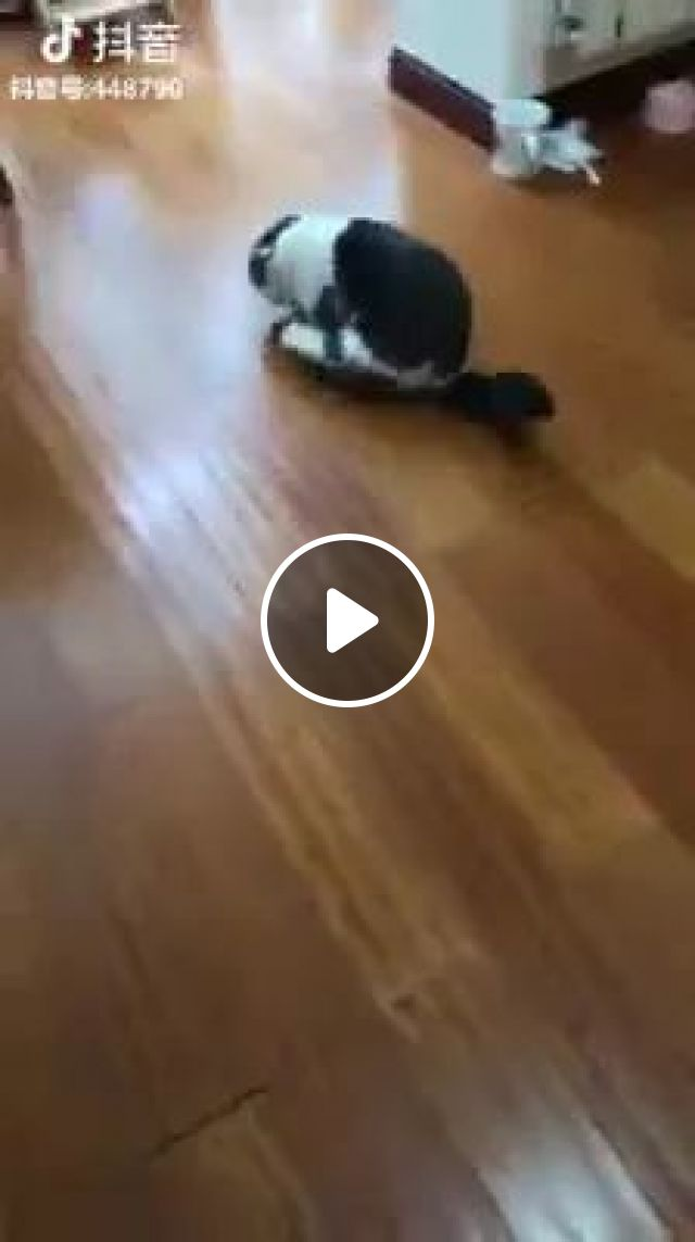 Eggs Roll On The Floor - Video & GIFs   cat, adorable, funny