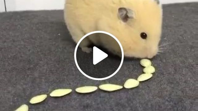 Lovely Mouse And Delicious Food - Video & GIFs | Cute mouse, take care of pets, animal food, funny animals