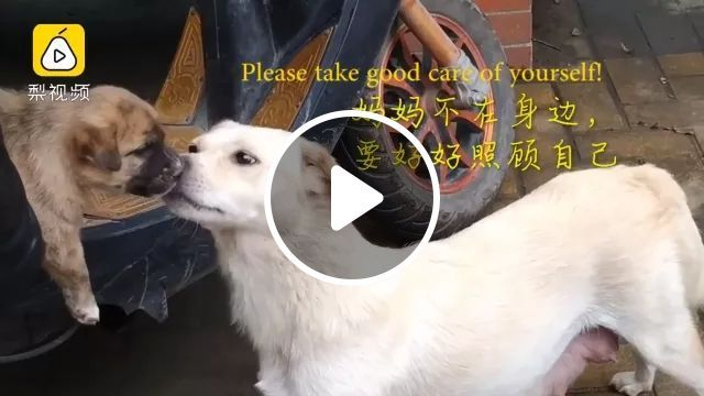 Let me kiss my baby one last time, dog, adorable, street
