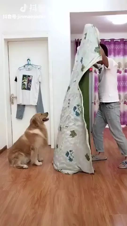 Smart dog playing with a man in living room