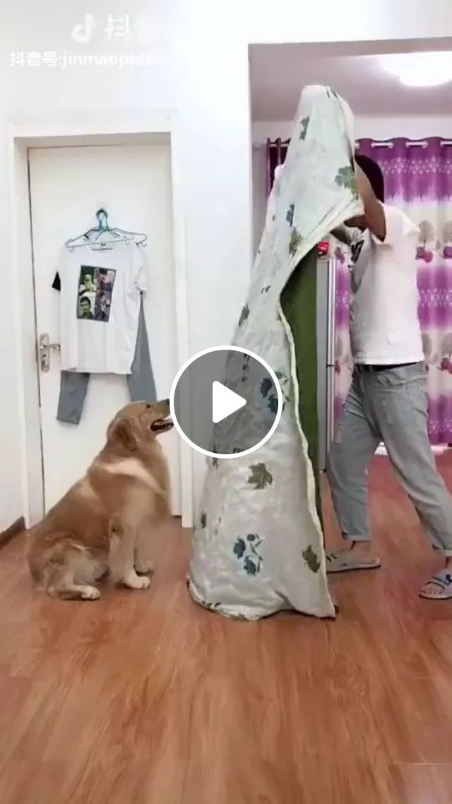Smart dog playing with a man in living room, Smart dog, funny men, luxurious living room