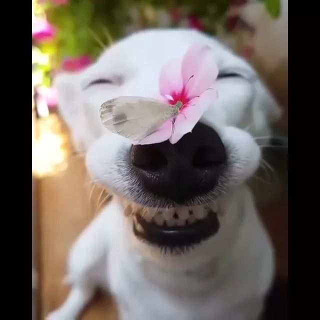 Health Benefits of Laughter,lovely dog with flower on the nose
