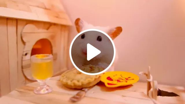 Mouse Is Served Food In Restaurant - Video & GIFs | Mouse, animals, pets, service, food, restaurants, good food, healthy