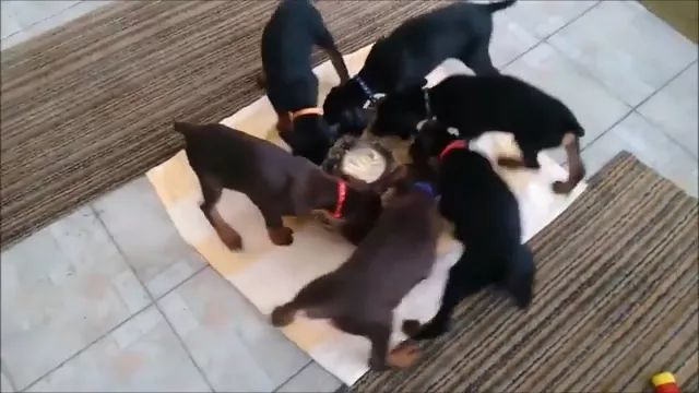 dogs are eating very lovely