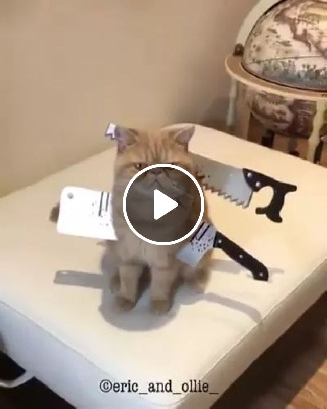 Knife props and a cat in filming