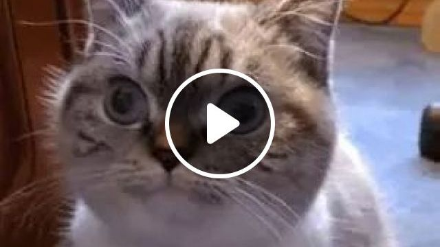 Cat Do Not Blink And A Man Does Not Blink - Video & GIFs | cat, adorable, blinking, man, naimal, pet