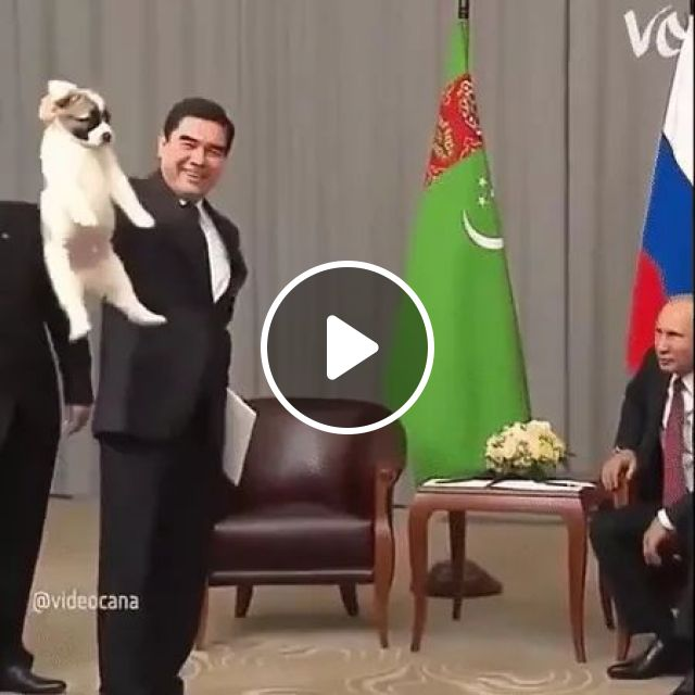 Putin:That's not how you hold a pupper.., dog, care, presidents, puppy, adorable