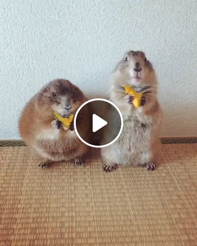 Me And You When We Go Out To Eat - Video & GIFs   Cute animals, mouse friendly, delicious food, animal care