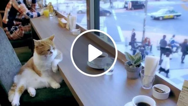 LONELY - Video & GIFs | cat, adorable, sad, alone