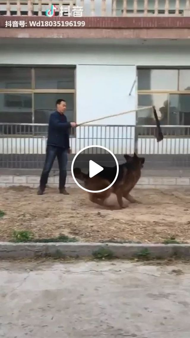 Man With Smart Dog On Chinese Street - Video & GIFs   Men, men's fashion clothes, smart dogs, funny animals, Chinese streets